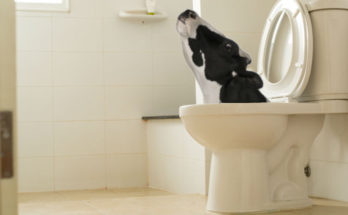 5 Weirdest Things Ever Found in Someone's Plumbing