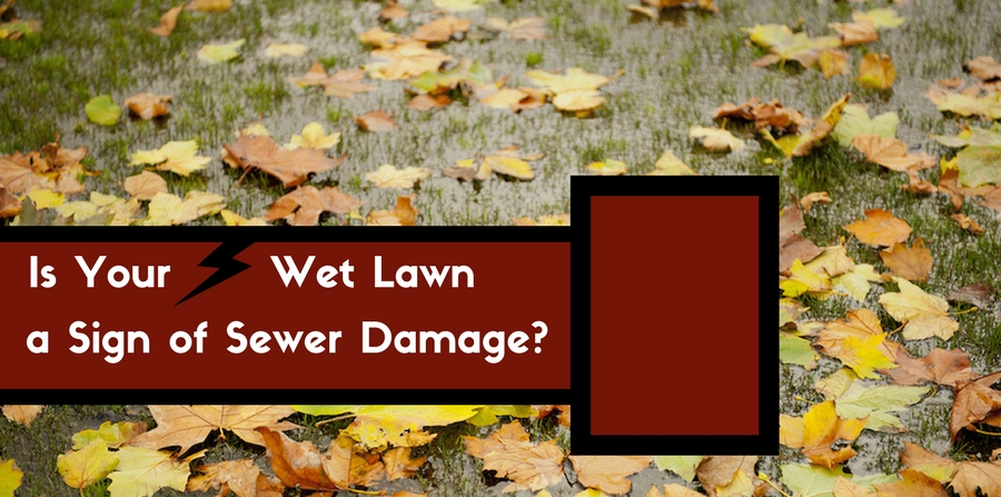 Is A Wet Lawn A Sign Of Sewer Problems Ben Franklin
