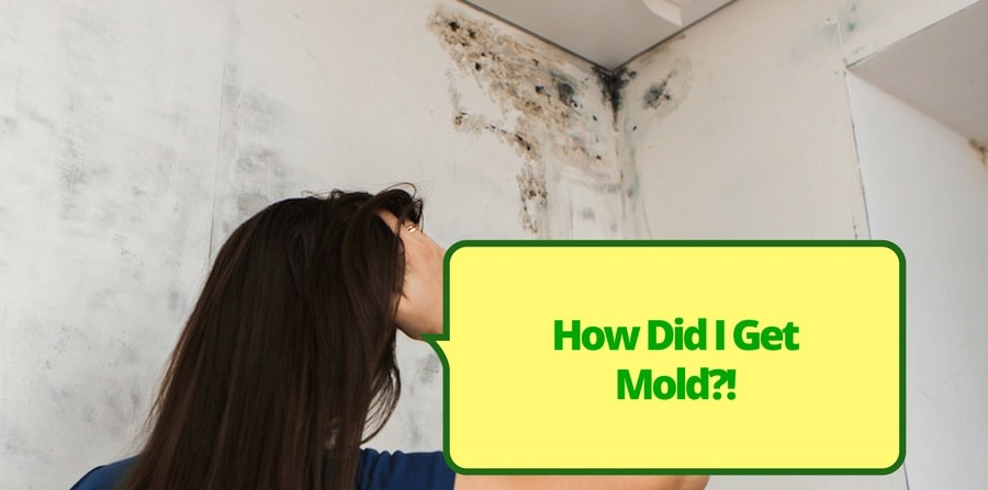 How Did I Get Mold?
