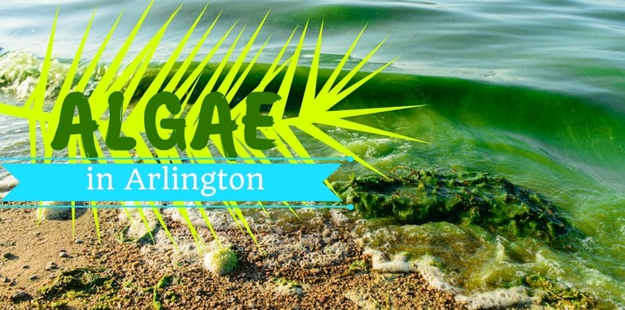 Algae in the Water: What You Should Know