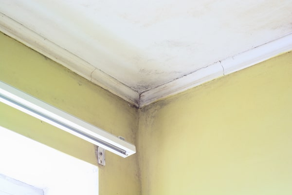 Mold in the upper corner of a room with yellow walls