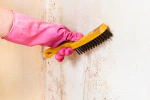 Cleaning mold off wall