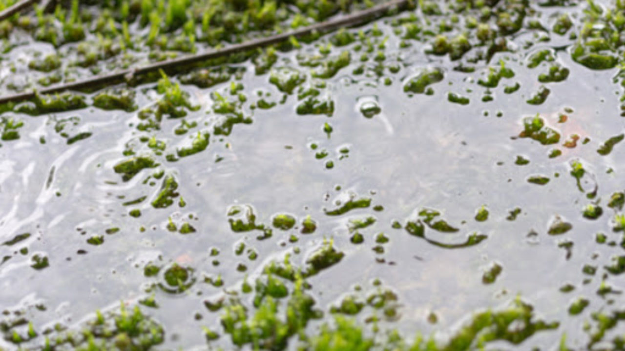 Is a Wet Lawn a Sign of Sewer Problems? | Ben Franklin Plumbing